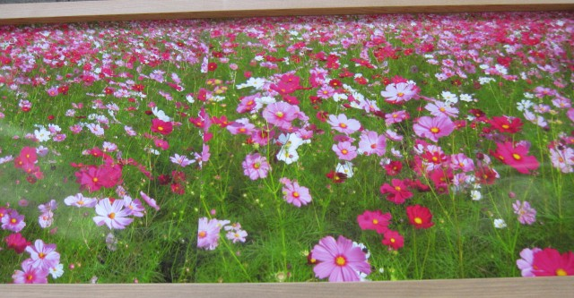 「我が家の庭」の写真展・・生涯学習センターで