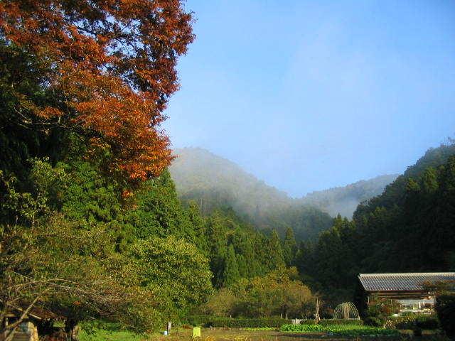 朝霧と紅葉