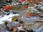 秋の高賀渓谷