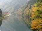 小瀬見橋からの紅葉