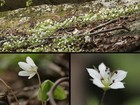4月29日高賀山登山で見た山の花(2)