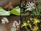 4月29日高賀山登山で見た山の花(4)
